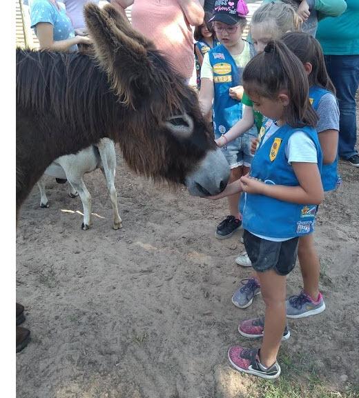 a donkey and kids